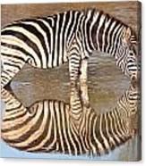 Zebra Times Two Canvas Print