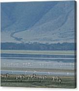 Zebras And Pink Flamingos, Ngorongoro Canvas Print