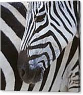 Zebras Close Up Canvas Print
