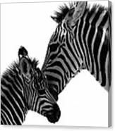 Zebras Mom And Baby Canvas Print