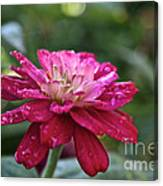 Zinnia Quenched Canvas Print