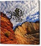 Zion Lone Tree Canvas Print