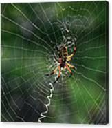 Zipper Spider Canvas Print