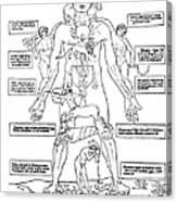 Zodiac Man, Medical Astrology Canvas Print