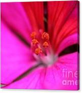 Zonal Geranium Named Tango Neon Purple Canvas Print