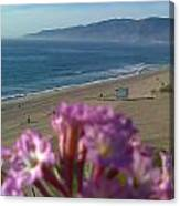 Zuma Beach Wildflower Canvas Print