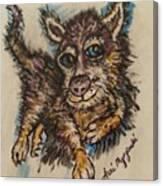 Blue Eyed Husky Canvas Print