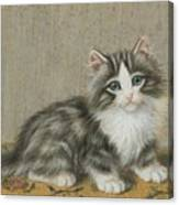 A Kitten On A Table Canvas Print