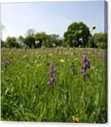 Ancient Hay Meadow Canvas Print
