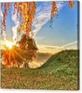 Birches At Sunrise  Canvas Print