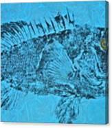 Black Sea Bass - Rockfish - Grouper Canvas Print