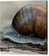 Burgundy Snail Canvas Print