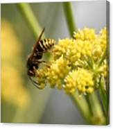 Common Wasp Canvas Print
