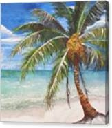Dessert Palm Canvas Print