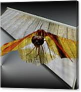 Eastern Amber Dragonfly 3d Canvas Print