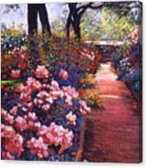 English Tea Roses Canvas Print