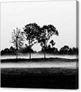 Evening Mist Black And White Canvas Print