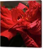 Flamenco Flower Canvas Print