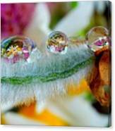 Friendly Company Of Rain Droplets On A Flower Cereal Canvas Print