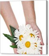 Giant Daisies For The Cosmetic  Industry Canvas Print
