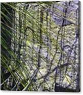 Grass And Stone  Canvas Print