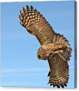Great Gray Owl Plumage Patterns In-flight Canvas Print