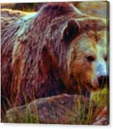 Grizzly Bear In Rocks Canvas Print