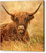 Happy Highlander Canvas Print