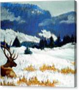 High Country Elk Canvas Print