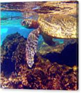 Honu On The Reef Canvas Print