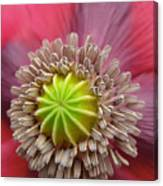 Inner Most Poppy Canvas Print