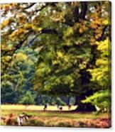 Landscape Under A Big Oak In Autumn Canvas Print