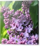 Lilacs On A Misty Morning Canvas Print