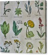 Lithography Of Common Flowers Canvas Print