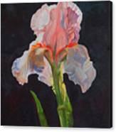 Majestic Iris Canvas Print