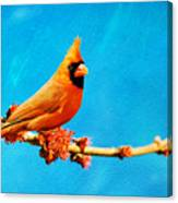 Male Northern Cardinal Perched On Tree Branch Canvas Print