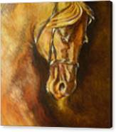 A Winning Racer Brown Horse Canvas Print