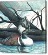 Merganser Duck Canvas Print