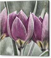 Miniature May Tulips Txt Canvas Print