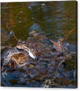 Mixed Frogs Canvas Print