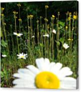 Oh Ditch Weeds Canvas Print