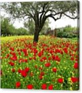 Olive Amongst Poppies Canvas Print