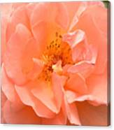 Peachy Perfection Canvas Print