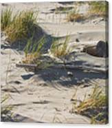 Sand And Driftwood Popham Beach Maine Canvas Print