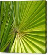 Spiny Fiber Palm Canvas Print
