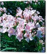 Summer Oleander Canvas Print