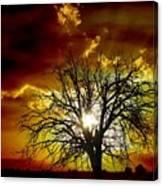'' Sunset Tree ''  Canvas Print