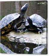 Turtles Sunning And Holding Hands Canvas Print