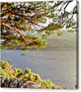 Warmth  Of The Pine Branch. Canvas Print