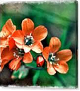 Wildflowers 5 -  Polemonium Reptans  - Digital Paint 3 Canvas Print